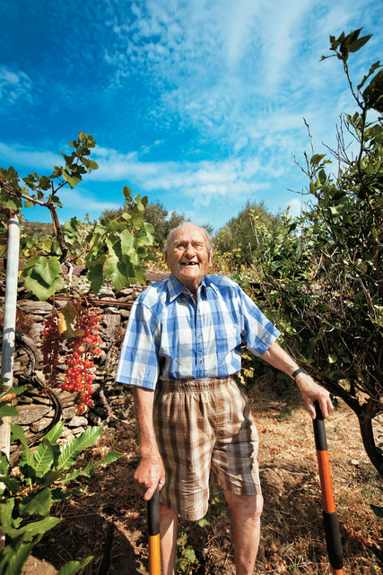Stamatis Moraitis tending his vineyard and olive grove on Ikaria. Credit Andrea Frazzetta/LUZphoto for The New York Times