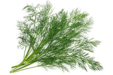 18-Spices-Scientifically-Proven-To-Prevent-and-Treat-Cancer-10-Dill