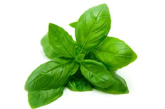 18-Spices-Scientifically-Proven-To-Prevent-and-Treat-Cancer-2-Basil