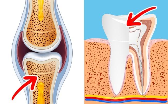 teeth bone